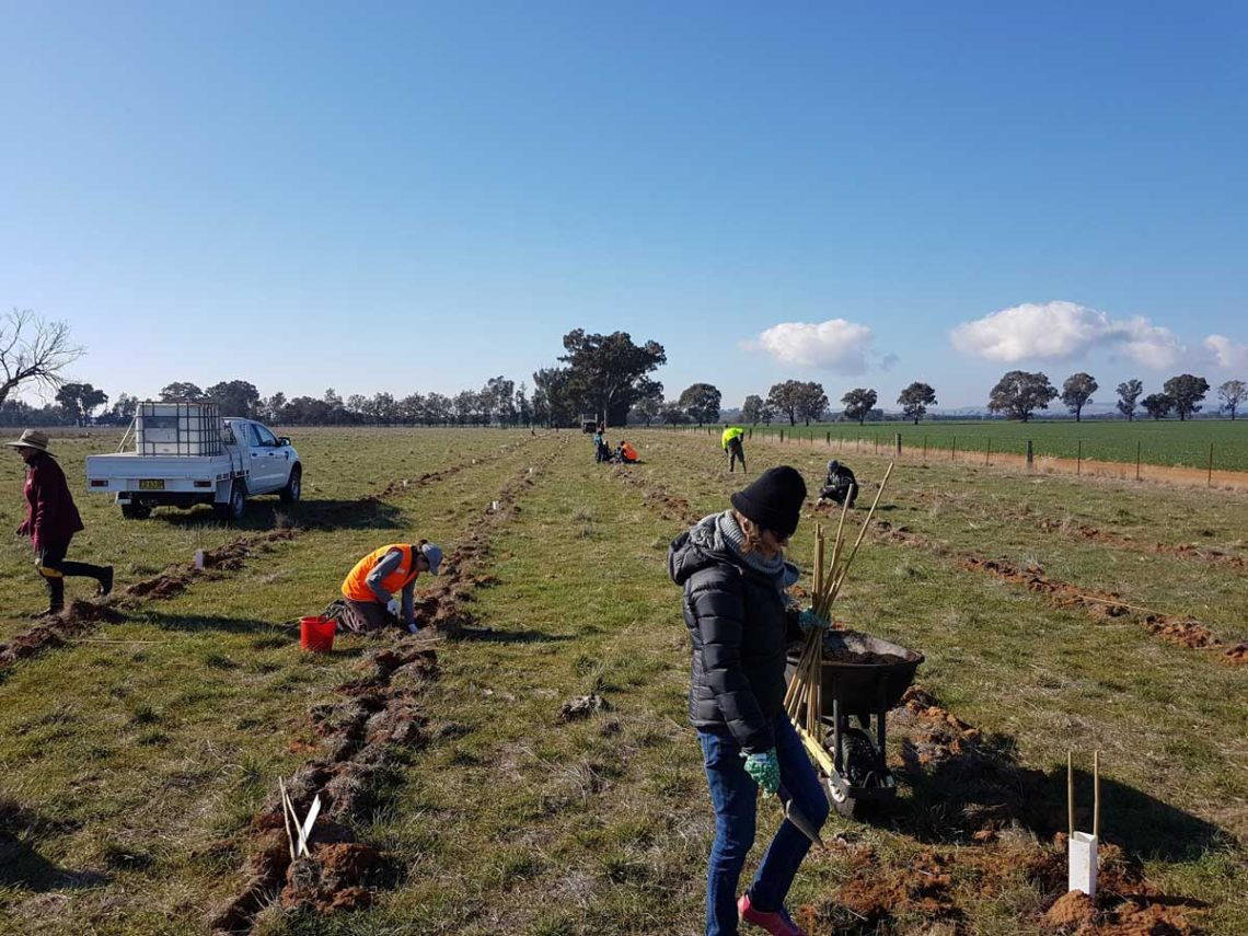 Stroud-Homes-supports-Landcare-Wagga-Wagga-planting-1