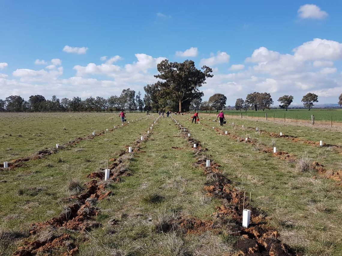 Stroud-Homes-supports-Landcare-Wagga-Wagga-planting-2